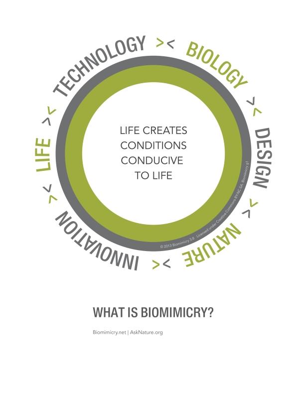Biomimicry38_DesignLens_Biomimicry_WEB