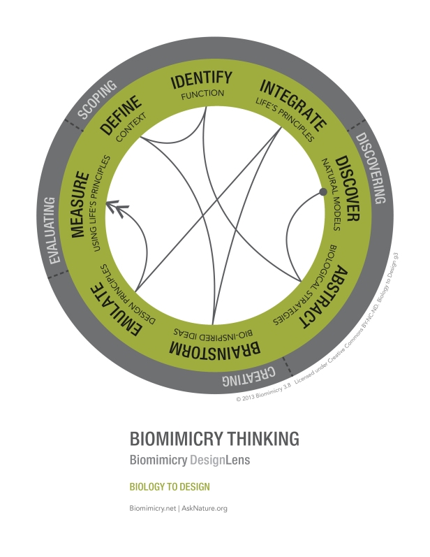 biomimicry38_designlens_biology_to_design_web